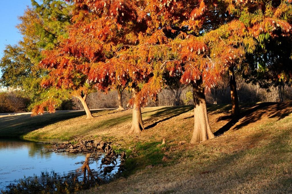 Autumn Photo by Natasha Ioffe (Student)